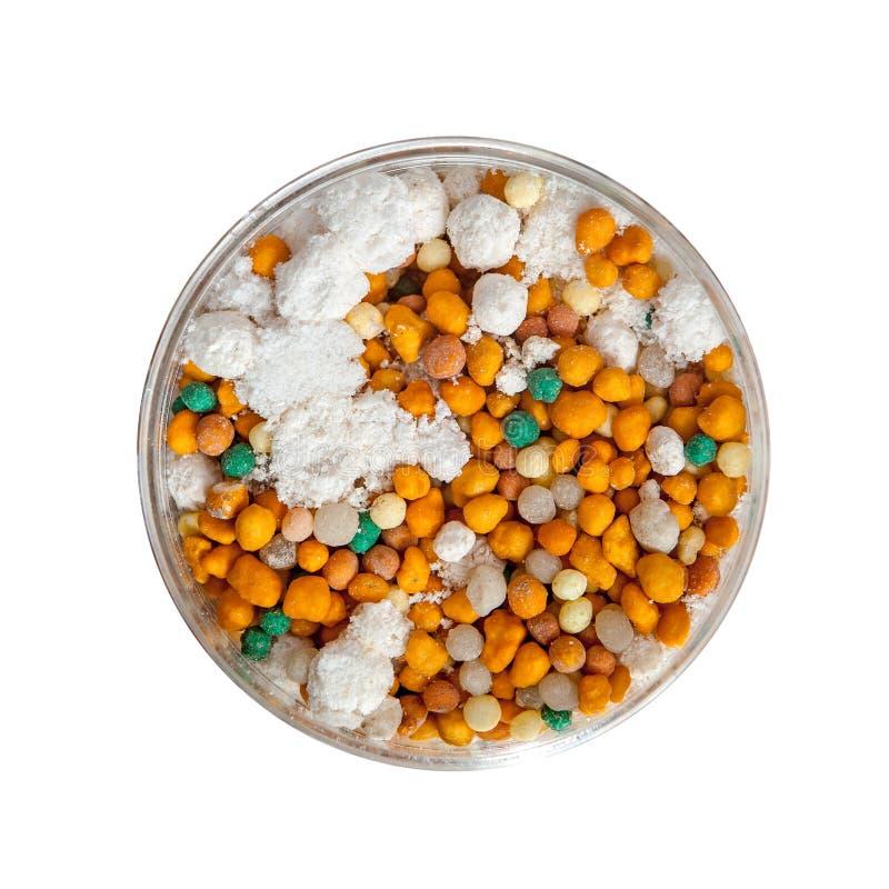 Granules d'engrais dans la boîte de Pétri photographie stock