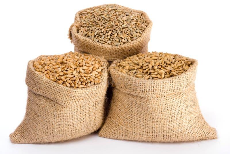 Granulo del diverso cereale immagine stock libera da diritti