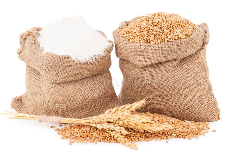 Granulo del frumento e della farina fotografia stock libera da diritti