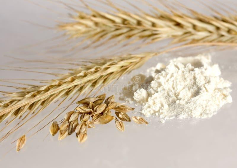 Granulo e farina bianca fotografia stock libera da diritti