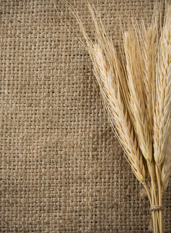 Granulo e sacco del frumento come priorità bassa immagini stock