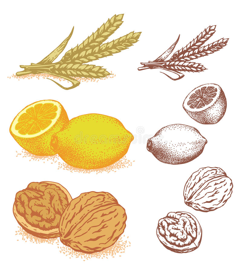 Granulo, limoni, noci royalty illustrazione gratis
