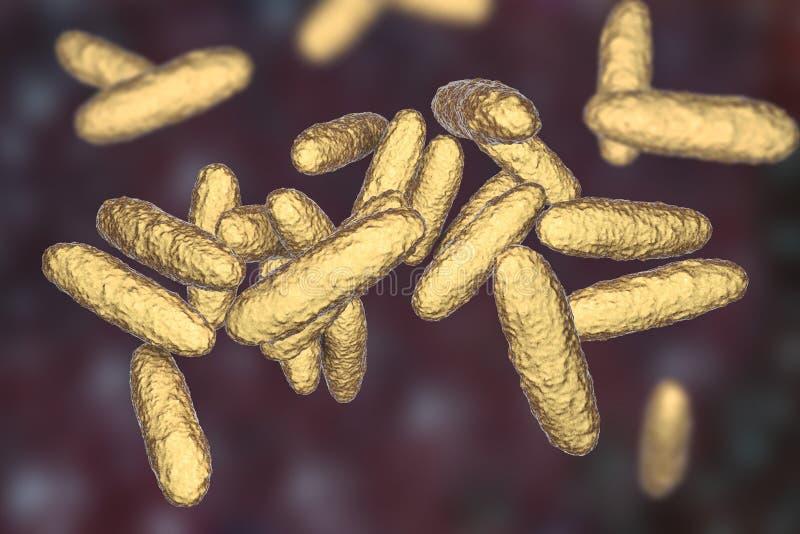 Granulomatis do Klebsiella das bactérias, o agente causal do inguinale do granuloma ilustração royalty free