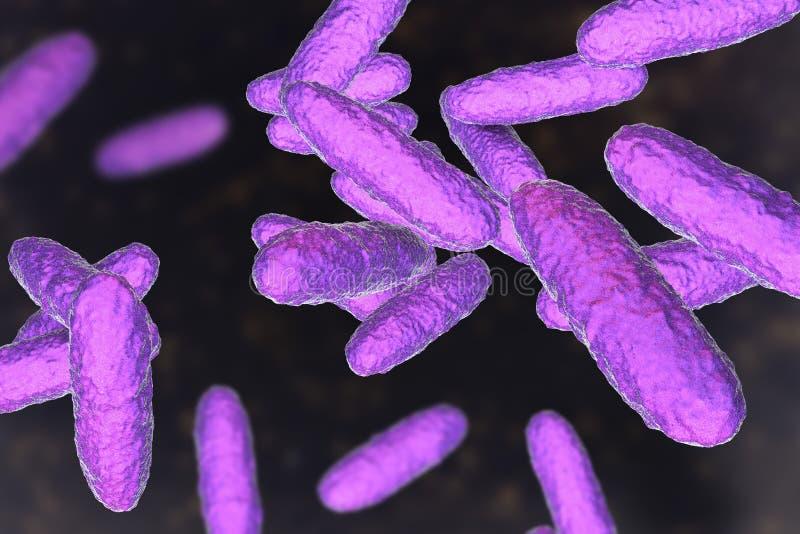 Granulomatis do Klebsiella das bactérias, o agente causal do inguinale do granuloma ilustração stock