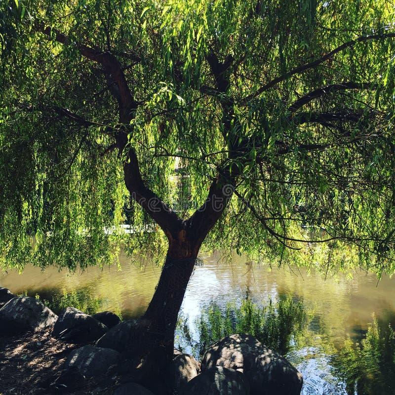 Granville wyspy drzewo obraz royalty free