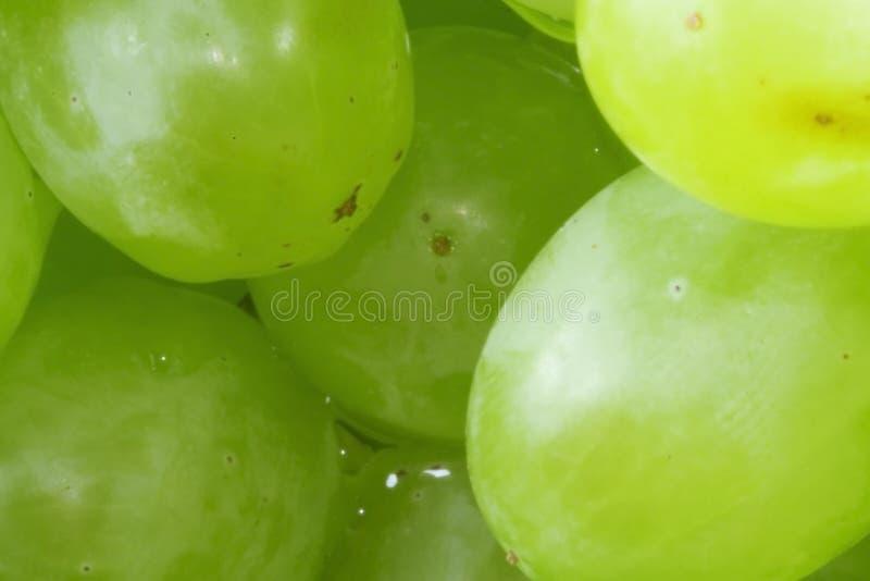 Grape. A macro view of grapes stock image