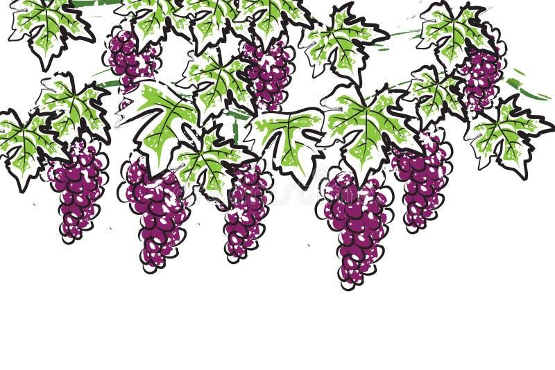 Download Grape stock illustration. Illustration of farm, eating - 12084034