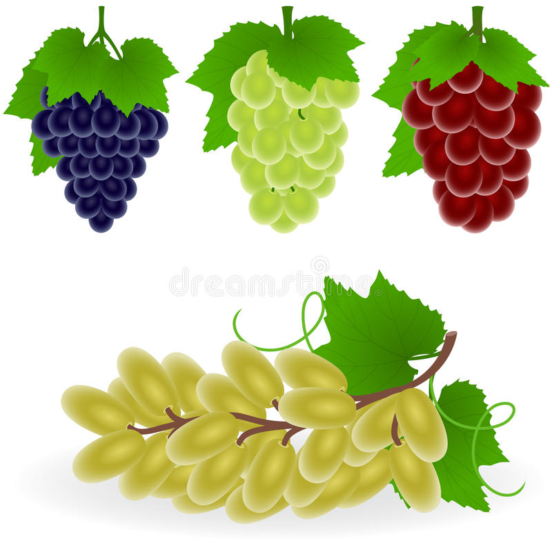 Grape stock illustration