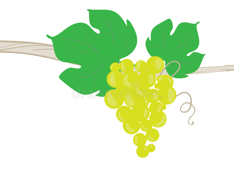 Download Grape stock vector. Image of yield, making, september - 16238896