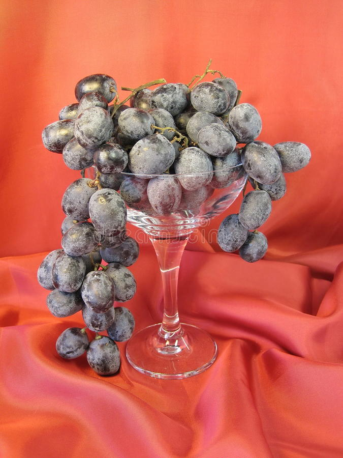 Grape. Fresh grape on red background stock photography