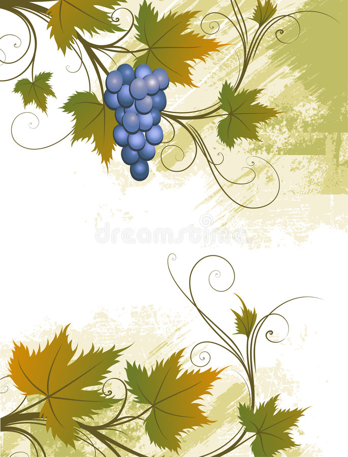 Grape royalty free illustration