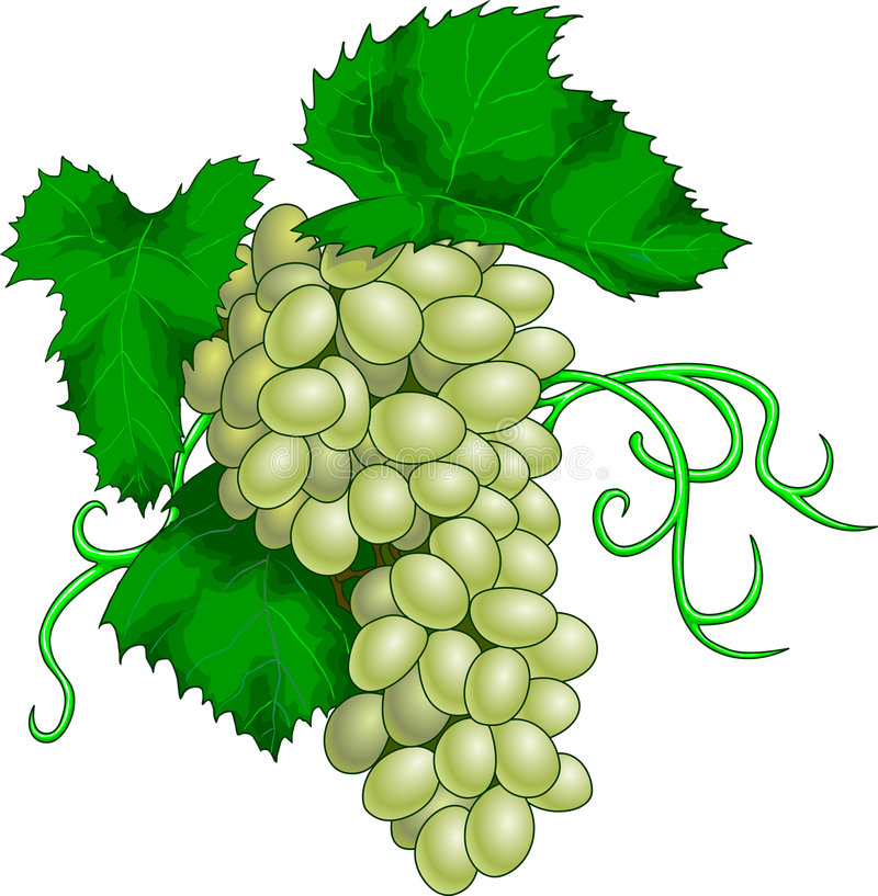 Download Grape Royalty Free Stock Photo - Image: 3881155