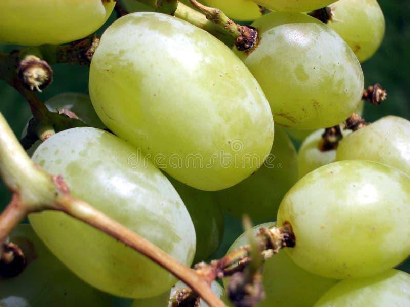 Grape 6 Stock Photos