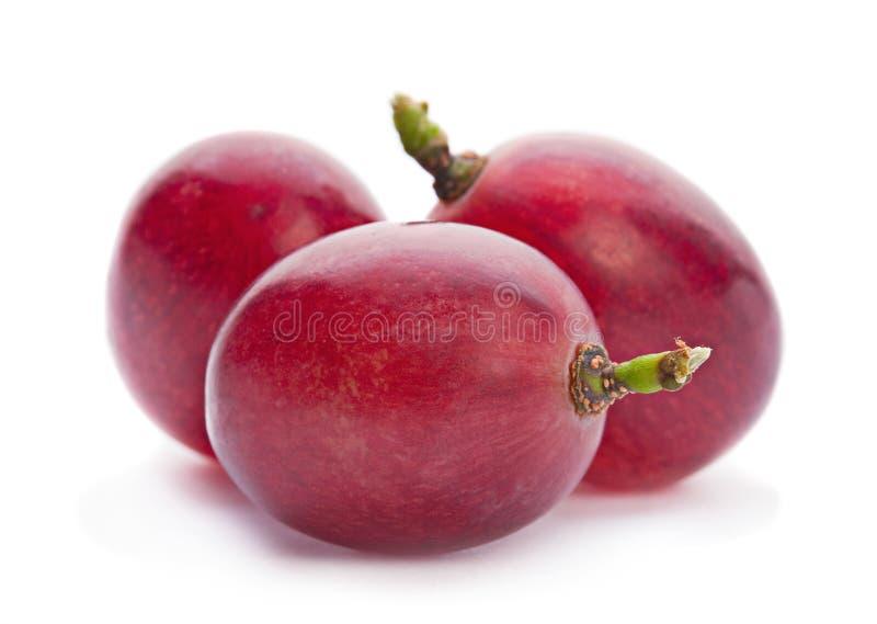 Grape berry closeup stock photos