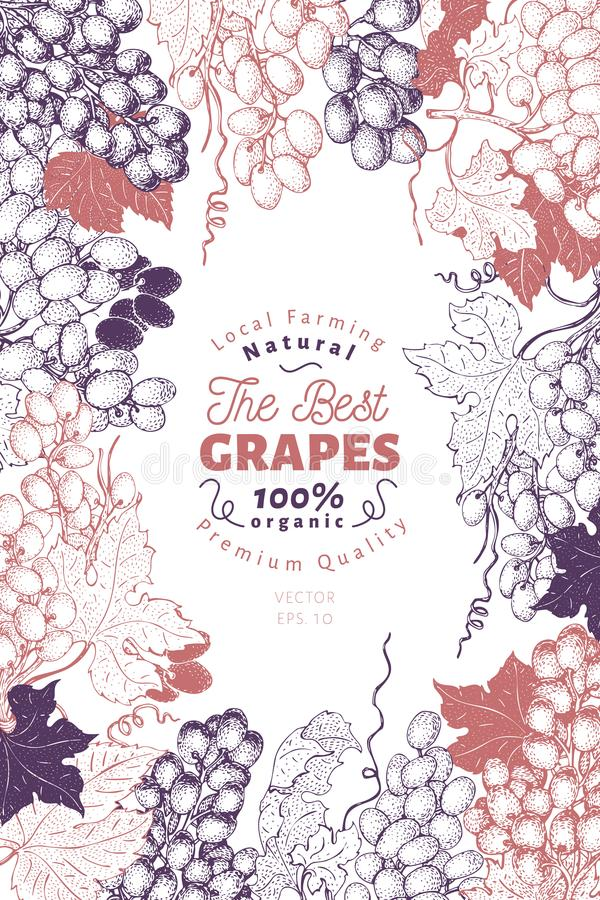 Grape berry frame template. Hand drawn vector fruit illustration. Engraved style vintage botanical background. Grape berry frame template. Hand drawn vector royalty free illustration