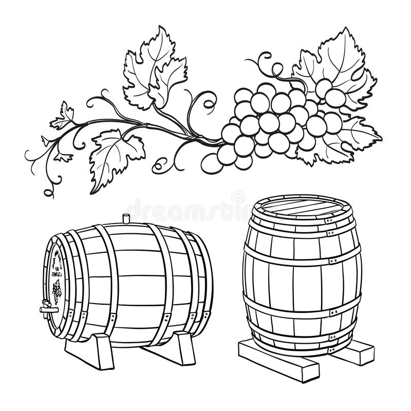 Grape branches and wine barrels. Isolated on white background. Hand drawn vector illustration vector illustration
