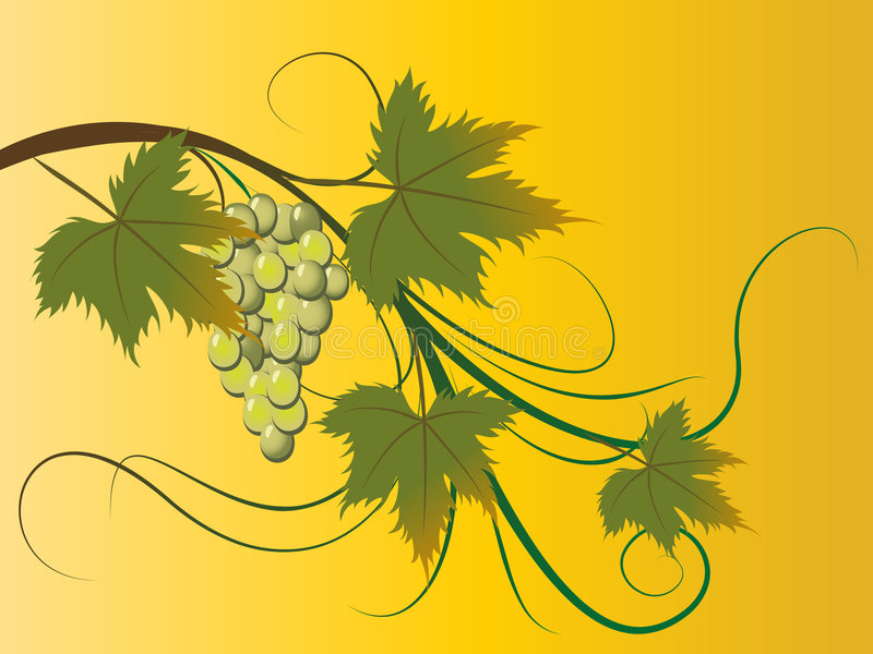 Download Grape brunch stock vector. Image of beautiful, grapes - 7952087