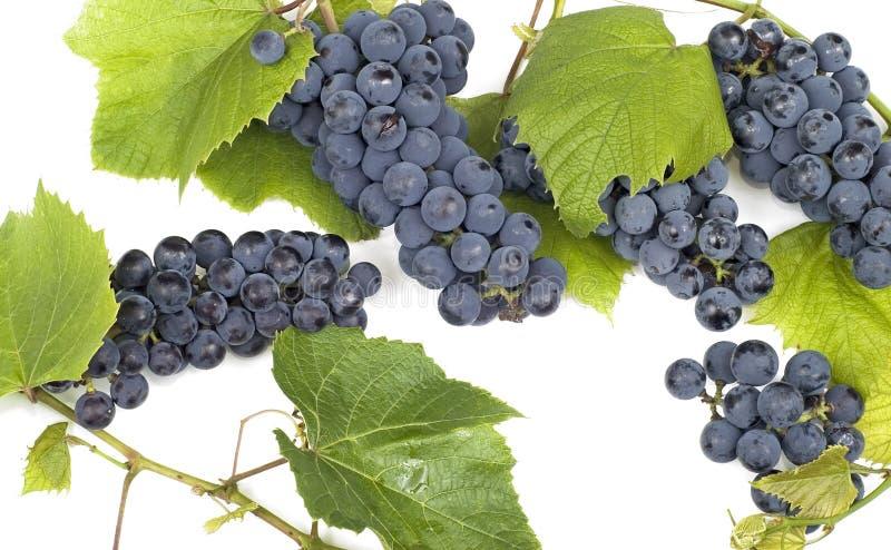 Grape bunch 5 royalty free stock photo