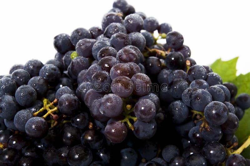 Grape close up stock photos
