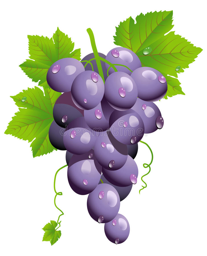 Free Grape Cluster Royalty Free Stock Images - 14162939
