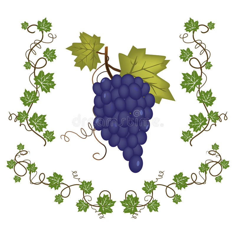 Download Grape Cluster With Green Leafs Stock Vector - Image: 25238367