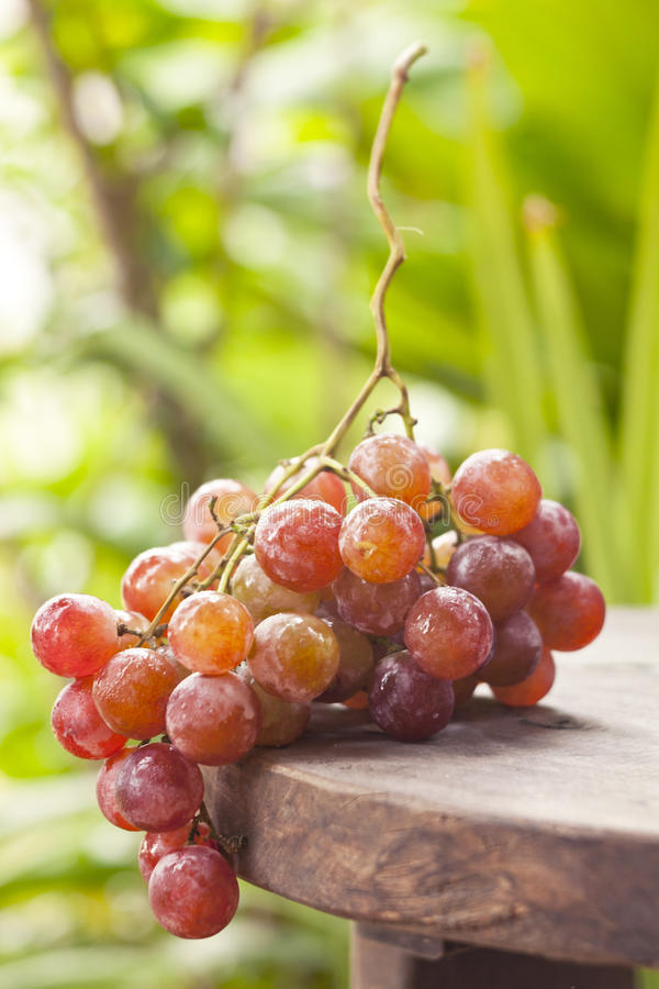 Grape. Fresh grape on the wood table stock photos