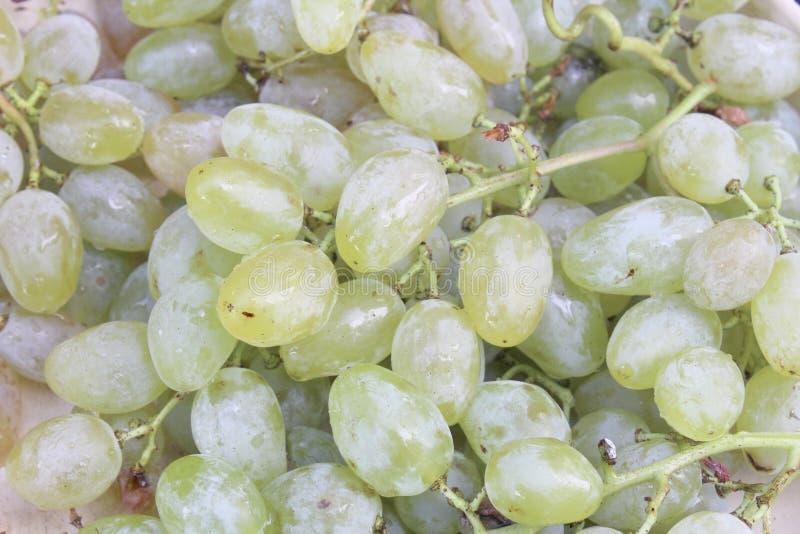 Grape grains from bulgaria stock photos