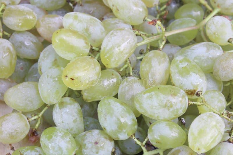 Grape grains from white grape stock image