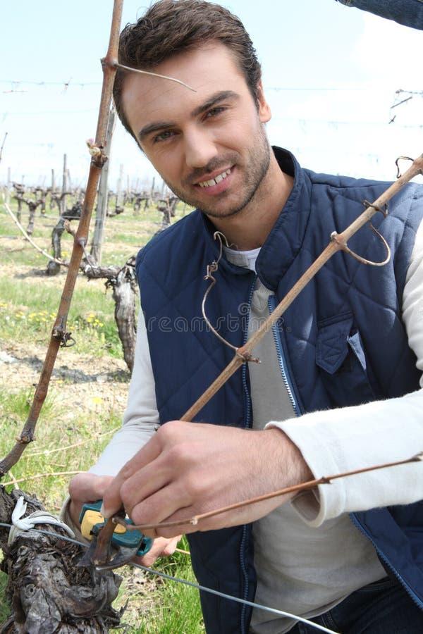 A grape grower stock photos