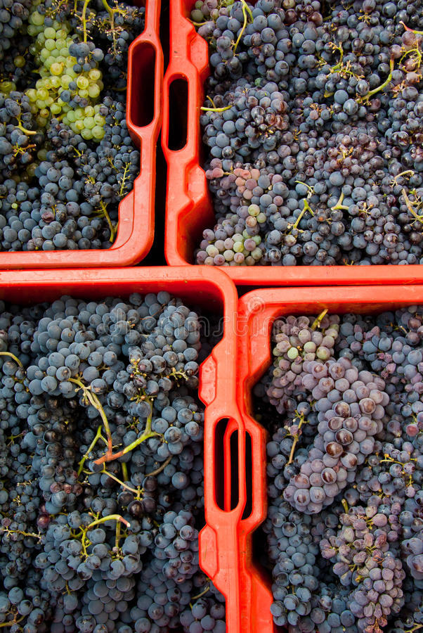 Grape Harvest Boxes Stock Images