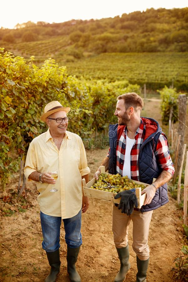 Grape harvest-smiling father and son at vineyard. Grape harvest-smiling father and son at family vineyard royalty free stock photo