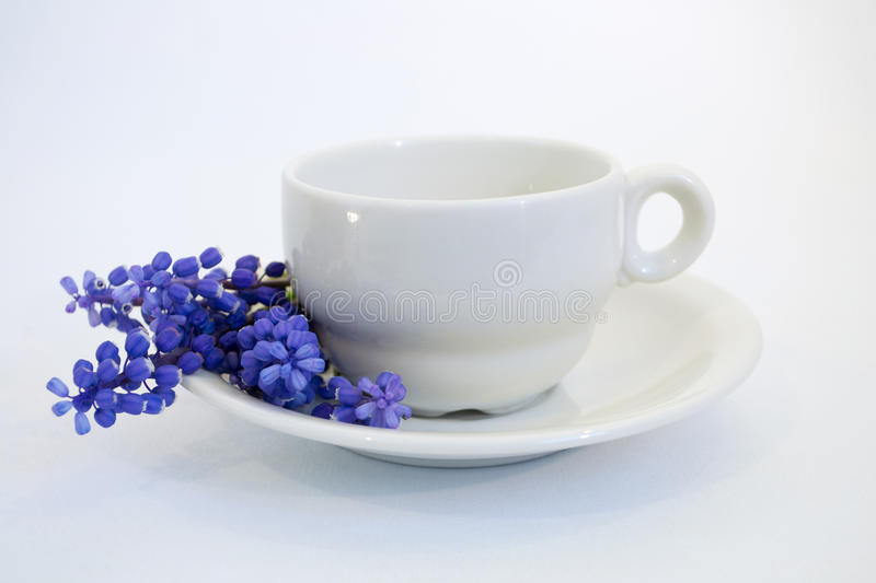 Grape hyacinths that decorate the coffee cup stock photography