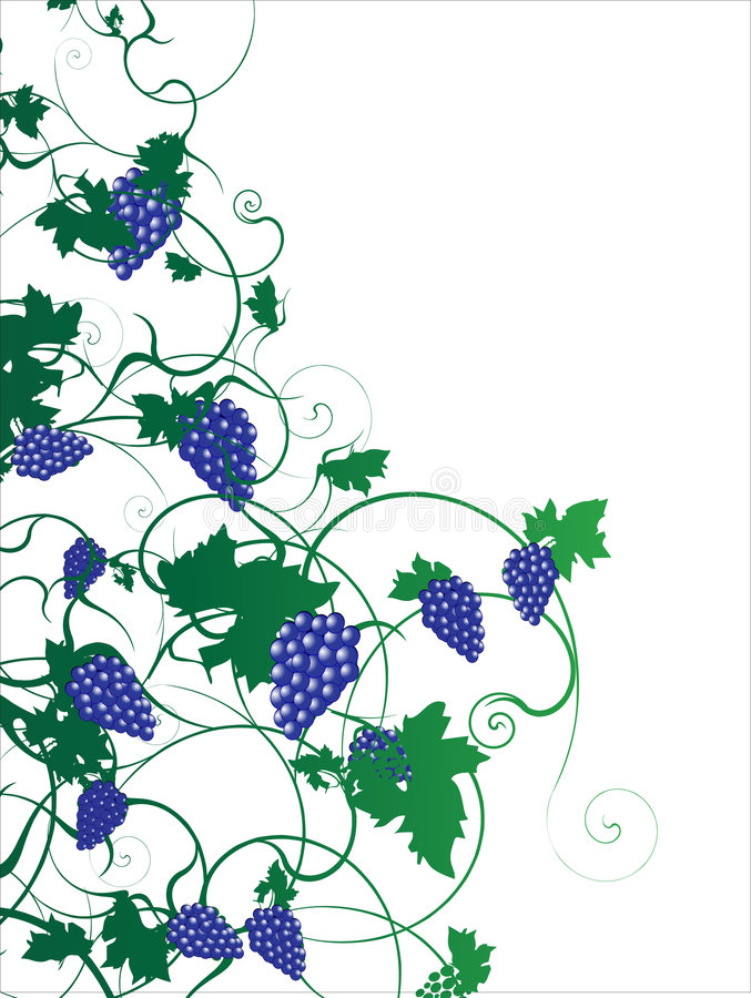 Free Grape Illustration 2.cdr Stock Images - 6299214