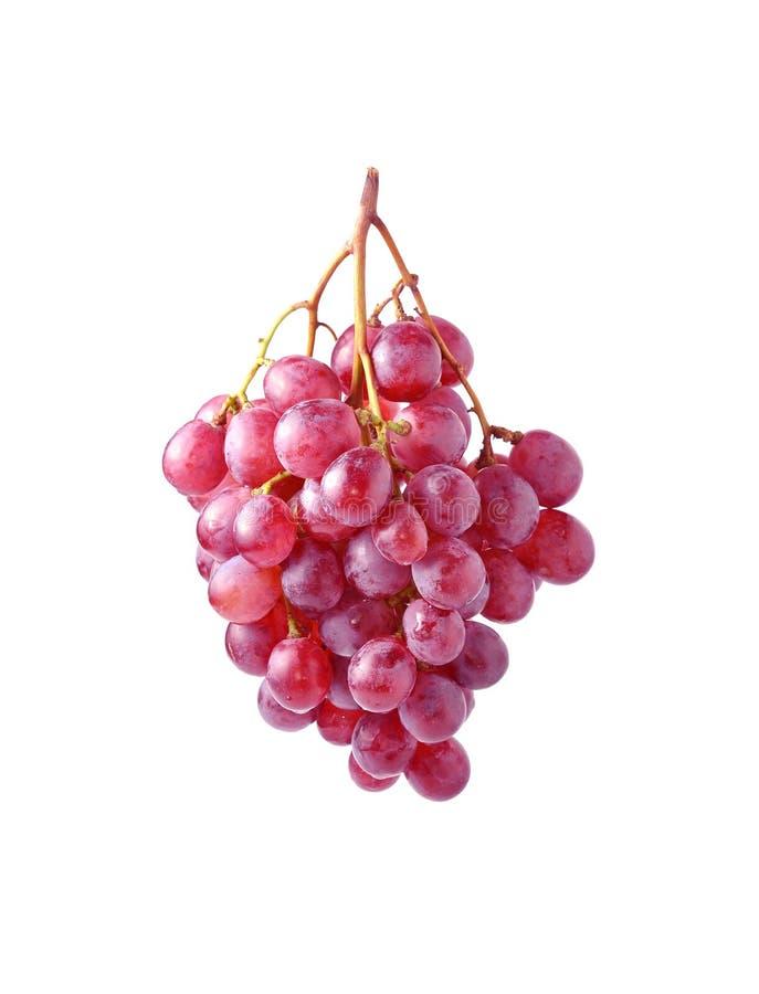 Grape Isolated On White Background royalty free stock photo