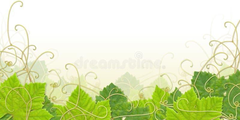 Grape leaf footer royalty free illustration
