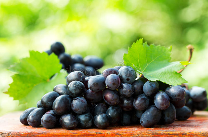 Grape with leaves royalty free stock photography
