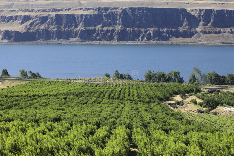 Grape orchards. Grape orchards along the Columbia river in Washington state royalty free stock images