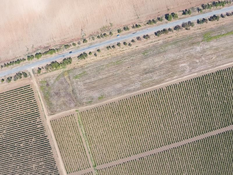 Grape bird`s-eye view. Vine rows. Top view of the garden. Highway among the vineyards stock photography