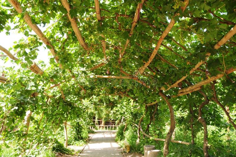 Download Grape Pergola Stock Image - Image: 21535121