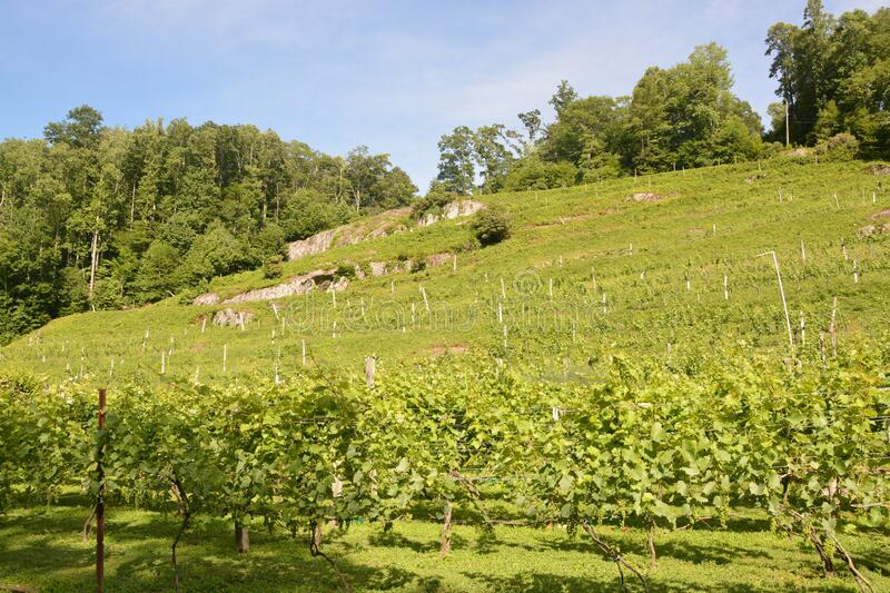 Summer hillside view royalty free stock images