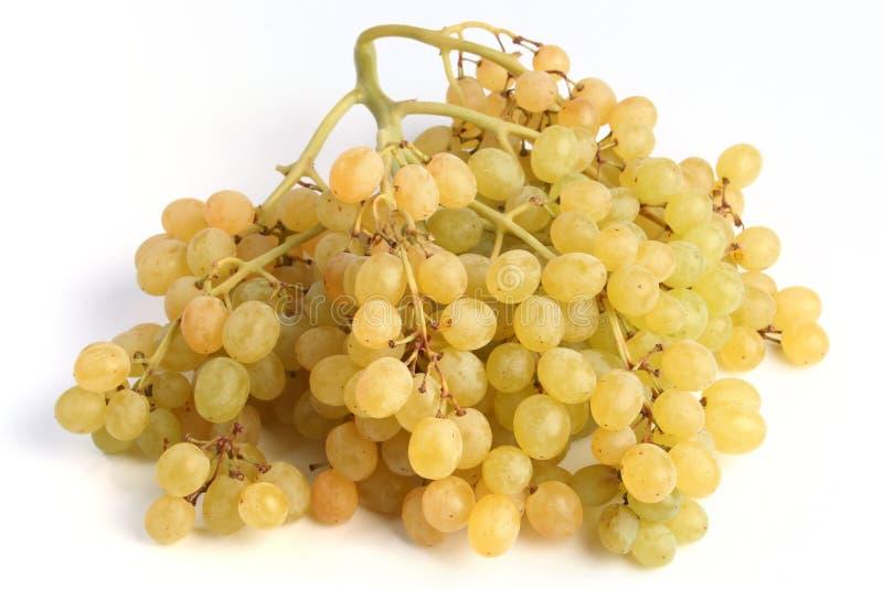 Grape raisins stock image