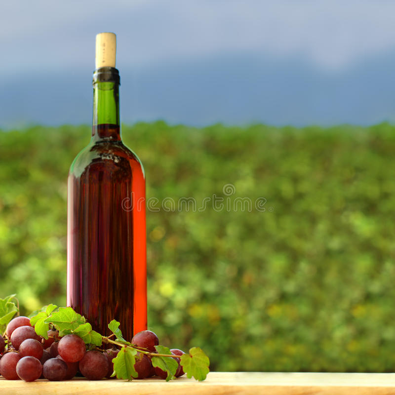 Download Grape and red wine bottle stock image. Image of wine - 26005409