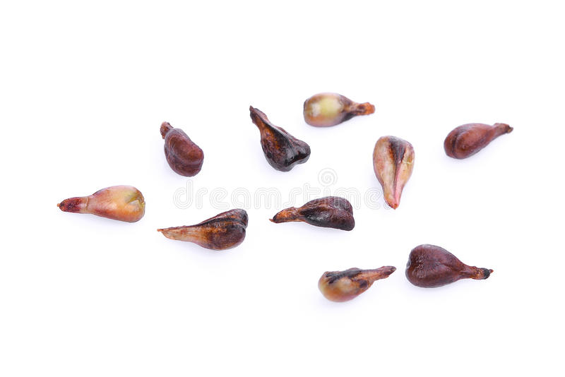 Grape seeds isolated on white royalty free stock images