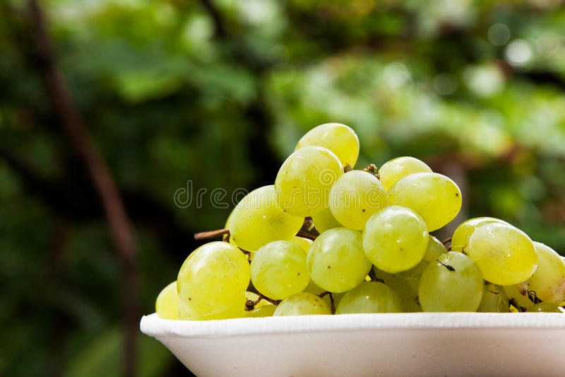 Grape and vine royalty free stock photography