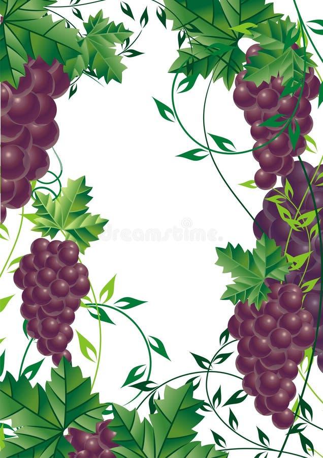 Free Grape Vine Design Element For Royalty Free Stock Photo - 3871685