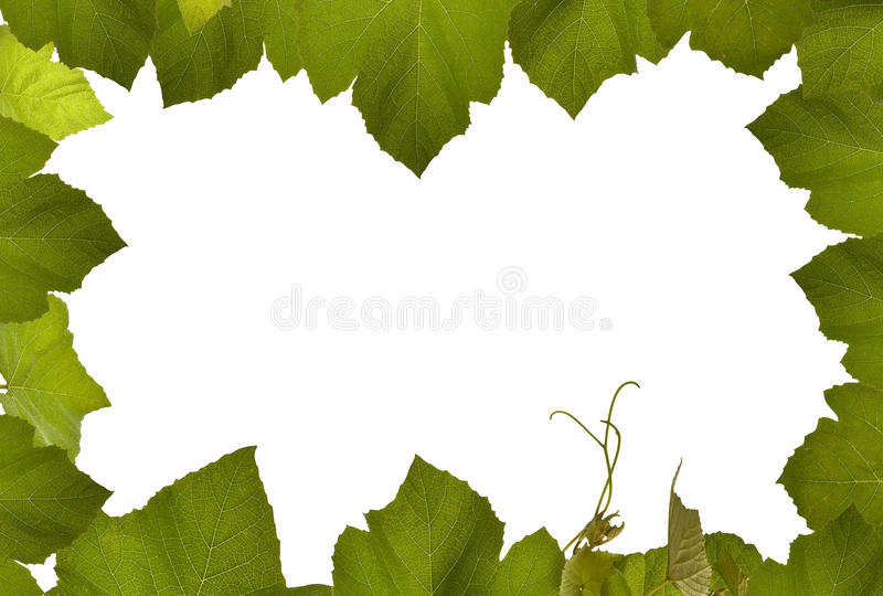 Download Grape Vine Frame Isolated With White Stock Photo - Image: 15446562