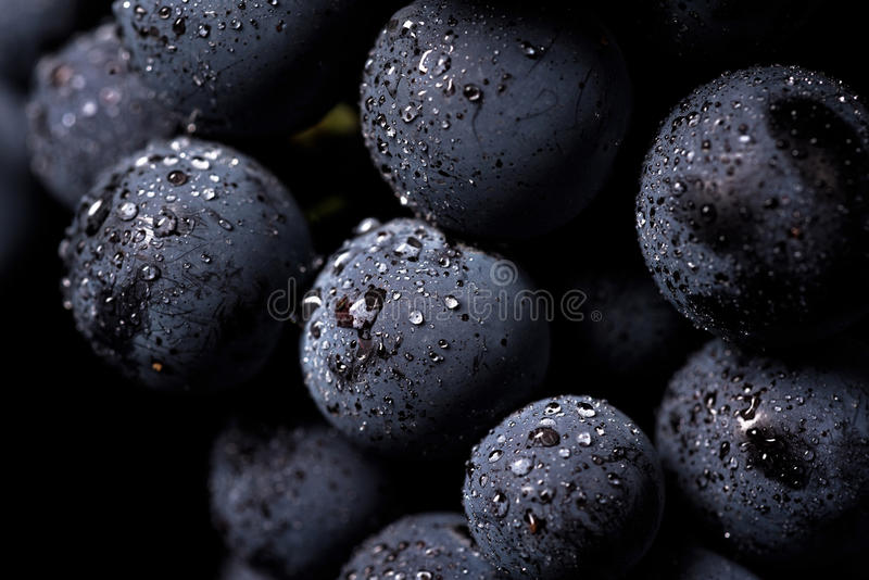 Grape vines isolated , water drops ,macro shot , black backgroun. D , ideal grapes bunch stock photo