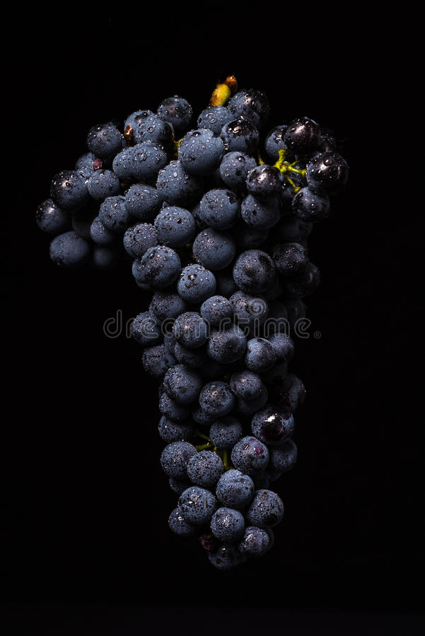Grape vines isolated , water drops ,macro shot , black backgroun. D , ideal grapes bunch stock images