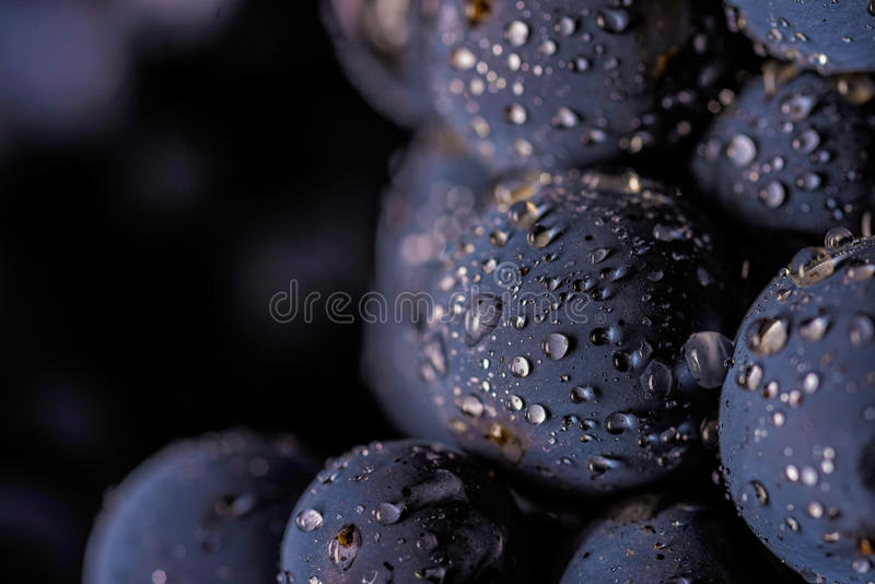 Grape vines isolated , water drops ,macro shot , black background. Ideal grapes bunch stock photo