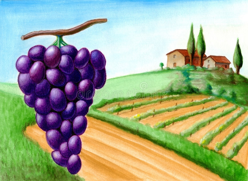 Grape and vineyard. Wine label illustration royalty free illustration
